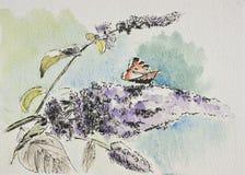 Buddleia, vlinder, waterverf het schilderen. Royalty-vrije Stock Afbeeldingen