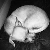Buddy Cuddled oben lizenzfreies stockbild