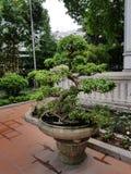 Buddyjscy Bonsai obrazy royalty free
