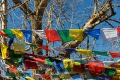 Buddyjska modlitwa zaznacza na drzewie, Muktinath fotografia stock