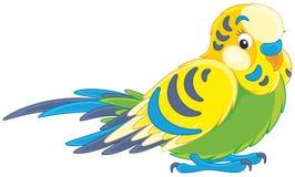 budgerigar ilustração royalty free