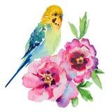 budgie的水彩图片与花的在白色背景 免版税库存照片