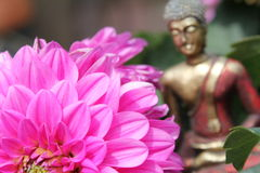 Budha bekijkt bloem. Stock Afbeeldingen