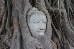 Budha de la cara en el árbol Foto de archivo libre de regalías
