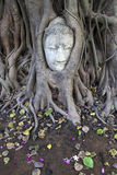 Budha head, Ayutthaya Royalty Free Stock Images