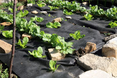 Budować jarzynowego i zielarskiego formalnego ogród. Fotografia Royalty Free
