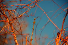Buds growing in the spring. At forest Royalty Free Stock Photography
