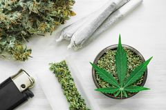 Buds of marijuana, Leaf of cannabis, joint and a grinder with crushed weed on a white background close up top view. Buds of marijuana, Leaf of cannabis, joint royalty free stock photography