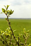 Buds in Minsk. Belarus Green Royalty Free Stock Photos