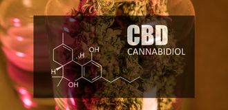 Buds Of Cannabis Marijuana With The Image Of The Formula CBD Cannabidiol Royalty Free Stock Photo
