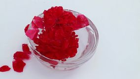 The buds and petals in a glass with water under a stream of clean water stock footage