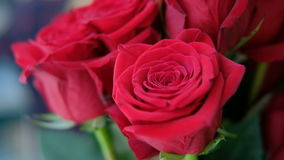 Buds of red roses in bouquet stand indoors. Bright scarlet flowers with velvety petals are collected in beautiful composition created by talented florist. This stock footage