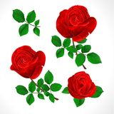 Buds red roses with leaves vintage on a white background set three vector illustration editable Stock Photography