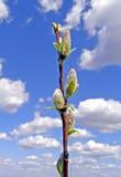 Buds tree Stock Photos