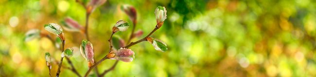 Buds on a tree branch against the sky. Image of buds on a tree branch against the sky stock photo