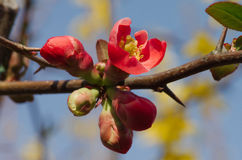 Buds of tree flowers Royalty Free Stock Photos