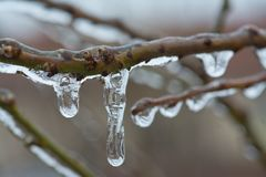 Buds of the tree frozen in ice with selective focus Stock Photography