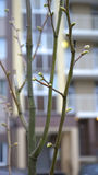 Buds on the trees. Stock Images