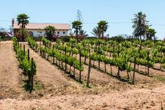Budujący w winnicy przy Adobe Guadalupe wytwórnią win w Ensenada, Meksyk obraz stock