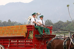 Budweiser Clydesdale Beer Wagon Royalty Free Stock Images