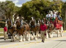 Budweiser Clydesdale Wagon Stock Image
