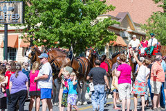 Budweiser Clydesdales in Coeur d' Alene, Idaho Stock Photo