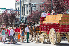 Budweiser Clydesdales in Coeur d' Alene, Idaho Royalty Free Stock Photography