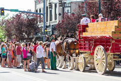 Budweiser Clydesdales in Coeur d' Alene, Idaho Royalty Free Stock Images
