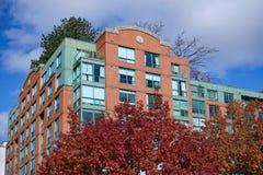 Budynek mieszkaniowy z dębowym drzewem obraz royalty free