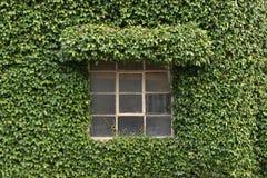 budynek objęta roślinnych obraz stock