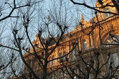 Budynek synkliny drzewa zdjęcia royalty free