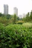 budynków kwiatu wysoki wzrost zdjęcie royalty free