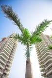 budynki palmowi Zdjęcie Stock