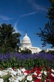 budynku capitol dc Washington Obraz Stock