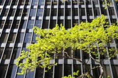 budynku drzewo Zdjęcie Royalty Free