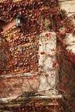 budynku powierzchowności winogrady Obraz Royalty Free