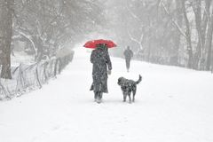 Budzić się psa W śnieżycy Zdjęcie Royalty Free