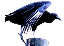 Bue bird. Silhouette stock image