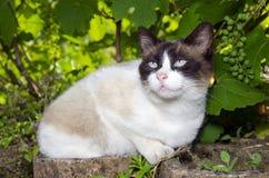 Bue observe le portrait de chat Photos stock