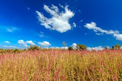 Bue sky and grass field. At Srisawat District Kanchanaburi, Thailand royalty free stock images