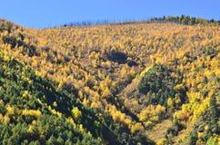 Bueatiful пейзаж осени горных склонов в Yading Стоковое Фото