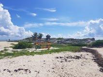 bueaty墨西哥湾海浪学校 库存图片