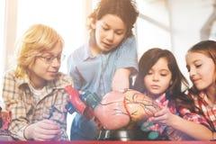 Buen alumno que se coloca alrededor del modelo del corazón Fotografía de archivo libre de regalías