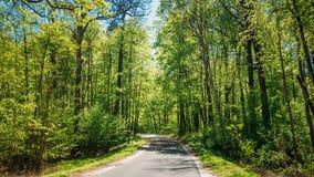 Buen día de Asphalt Forest Road In Sunny Summer carril foto de archivo libre de regalías