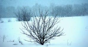 Buen día de invierno snowing fotografía de archivo libre de regalías