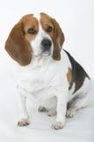 Buen perro #1 Fotos de archivo