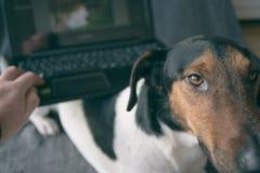 Buen perro Imagen de archivo libre de regalías