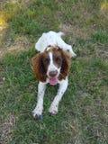 Buen perro Fotografía de archivo libre de regalías