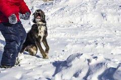 Buen perro en el primer de la nieve fotografía de archivo