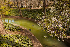 The Buen Retiro Park in Madrid Spain. El Retiro is the one of the largest parks of the city Madrid. This is the green heart of the Spanish capital Royalty Free Stock Image